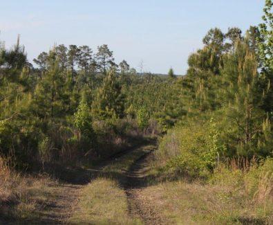 Longleaf Plantation at Blue Hills in Burkeville, TX
