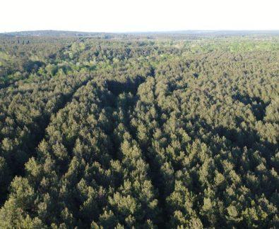 Pine Plantation at Blue Hills in Burkeville, TX