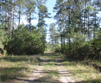 Natural Timber at Blue Hills in Burkeville, TX
