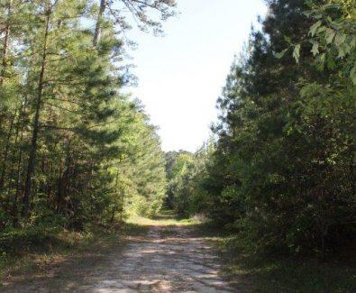 Interior Road at Blue Hills in Burkeville, TX