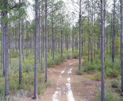 Loblolly Plantation at Ghost Fleet Tract in Baldwin County, AL