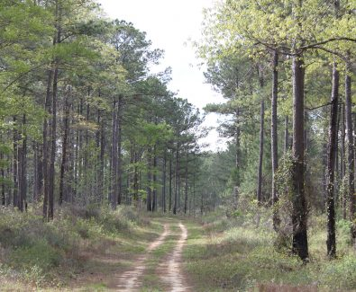 Interior Road at Ghost Fleet Tract in Baldwin County, AL