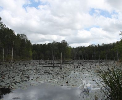 Natural Lake at Ghost Fleet Tract in Baldwin County, AL