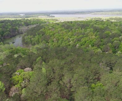 Looking West at Ghost Fleet Tract in Baldwin County, AL