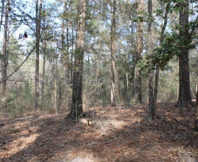 Natural Stand at Gulfcrest Tract in Gulfcrest, AL