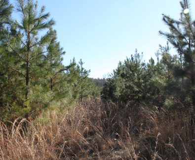 Pine Plantation at Holt 6D Adkin Hill in Deatsville, AL
