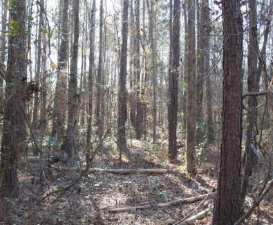 Natural Pine at Holt 6D Adkin Hill in Deatsville, AL