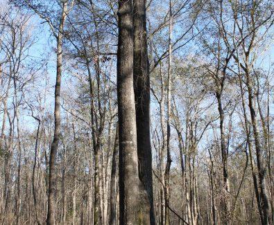 Hardwood at Holt 6D Adkin Hill in Deatsville, AL