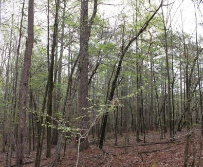 Timber at Rebecca Mountain 27 in Hollins, AL