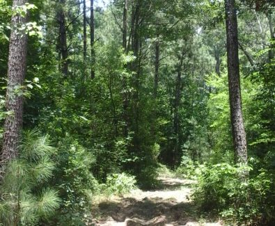 Access Road at Sabine Timberlands in Sabine Parish, LA